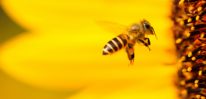 World Bee Day: let's discover the curiosities and the role of our friends