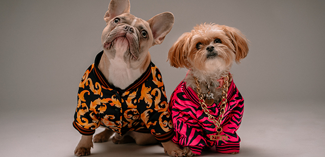 Manny, Crusoe, Scott, Tex e Doug: i dog influencer più famosi del web